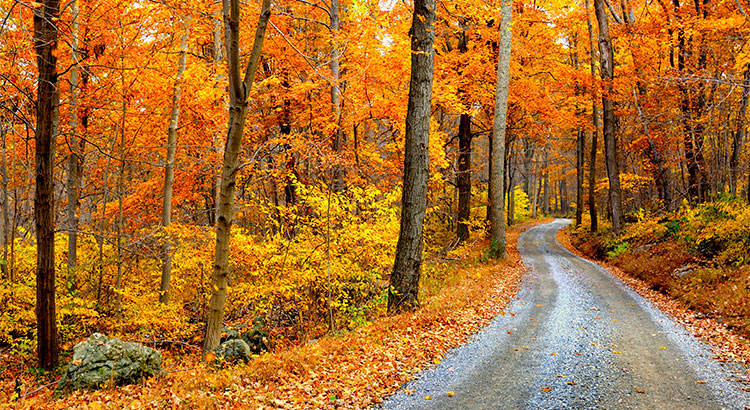 4 Reasons to Buy a Home This Fall!   Simplifying The Market
